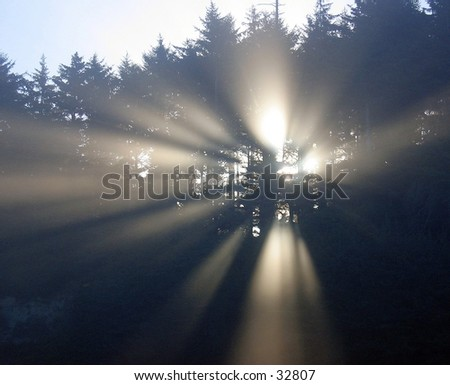Sun streaming through the trees at Prairie Creek State Park, California