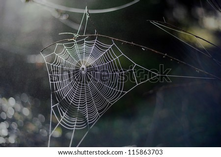 sunbeam on spiderweb in a foggy forest #115863703