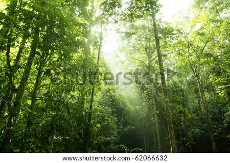 Sunbeam shine thru the tropical green forest