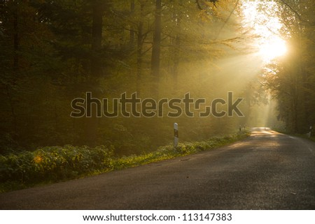 sunbeams in colorful autumn forest