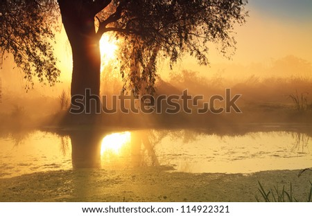 Sunbeams in misty morning on the river