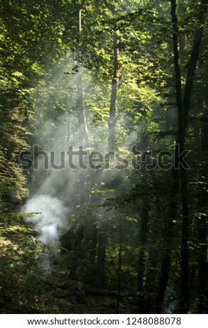 Sunbeams in smoke; barbecue in the woods of Romandie, Gorges de l'Areuses #1248088078