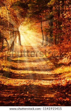 Sunbeams on a forest path in golden autumn