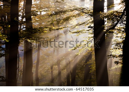 Sunbeams penetrate the forest in late afternoon.
