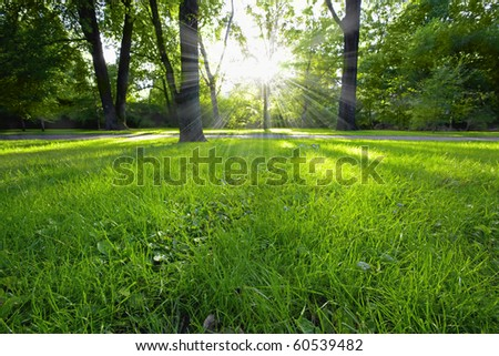 Sunbeams shining trough in the forest