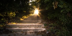 Sunbeams Through The Forest. Sunbeams illuminate a stairway surrounded by a tunnel of trees.
