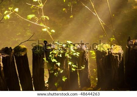 Sunbeams trough a mystical forest - stock photo