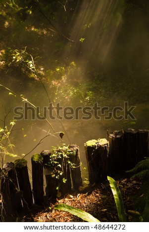 Sunbeams trough a mystical forest - stock photo
