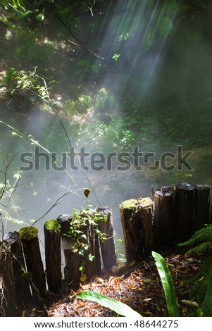 Sunbeams trough a mystical forest