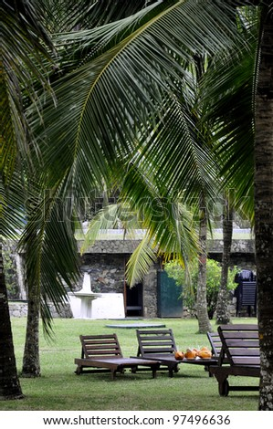 Sunbeds in a lawn at a resort surrounded by palm trees on the coast, Sri Lanka