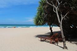 Sunbeds on a paradisiac beach with palm trees in Trincomalee, Sri Lanka