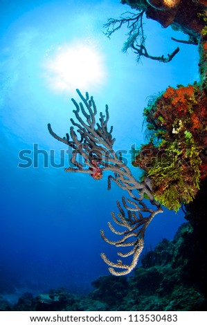 Sunburst with Coral Reef in foreground