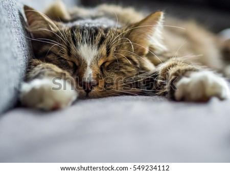 sunday sleep