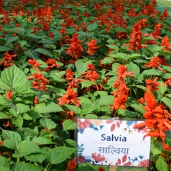 Sunder Nursery is a 16th century heritage park complex situated near Humayun's Tomb in New Delhi India. These colorful flowers increase the glory and beauty of the place, Spring season flowers bloom