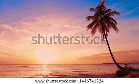 Sundown landscape on island beach. Palm tree on shore. Yellow sun in orange clouds and blue sky. Sundown over sea seascape. Travel vacation paradise to island coast. Paradise isle sundown background.
