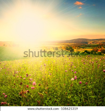 Sundown on green meadow. Glow sun and bright sky.