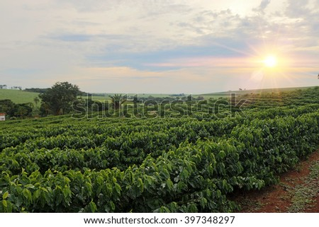 Sundown on the coffee plantation landscape