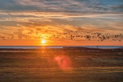 Sundown over the Baltic Sea at Bunkeflo Strandangar. A flock of sea birds is crossing the scene at sunset on the green natural reserve conveying tranquillity and calm concept - Bunkeflostrand, Sweden
