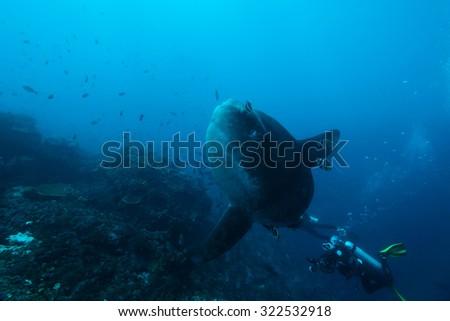 sunfish under the sea #322532918