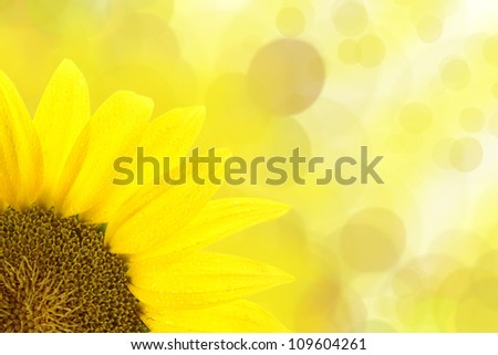 Sunflower against yellow spotted background