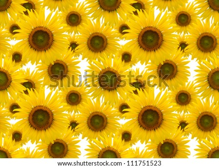 sunflower background, seamless pattern, can repeat unlimited