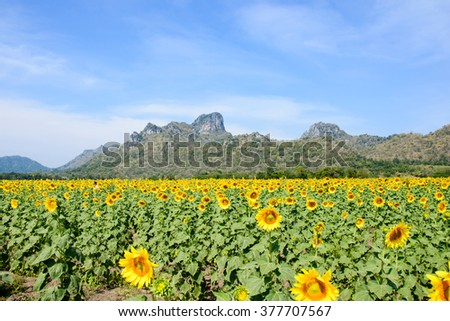 sunflower field over cloudy blue sky and bright sun lights #377707567