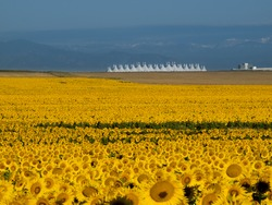 Sunflower field with Denver International Airport in the background.
