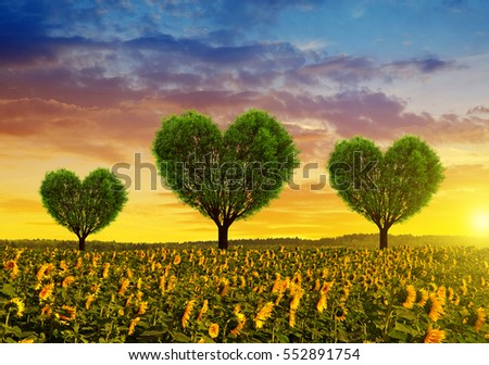 Sunflower field with trees in the shape of heart at sunset. Valentines day.
