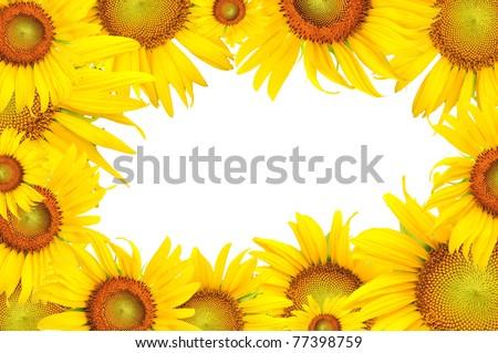 Sunflower Frame Sunflower Frame Stock Photo