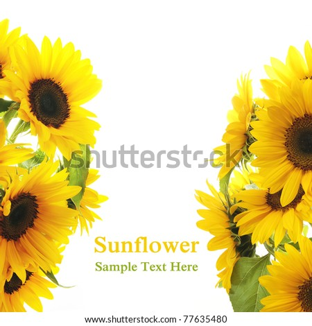 Sunflower Frame . On white background