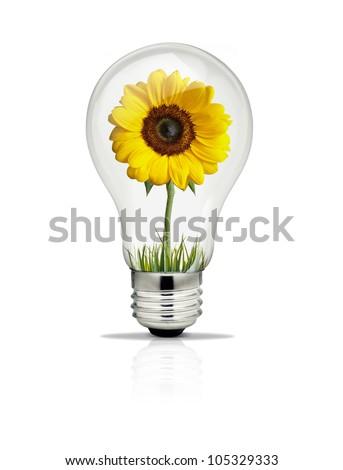 Sunflower growing inside light bulb.