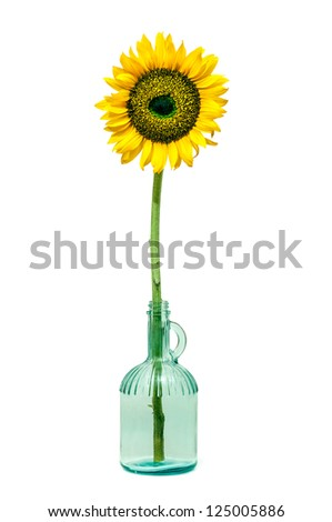 Sunflower in a bottle isolated on white background