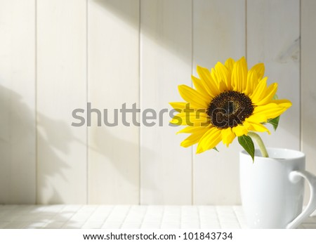 Sunflower in a white cup