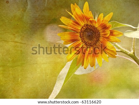 Sunflower in the sunshine  with copy space.  Grunge textured.