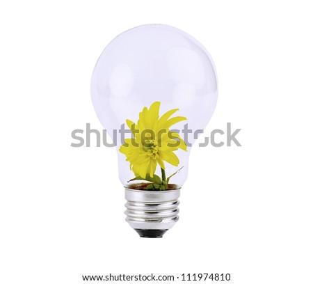 sunflower  inside the light bulb