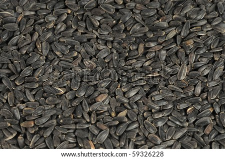 Sunflower seeds close up as background