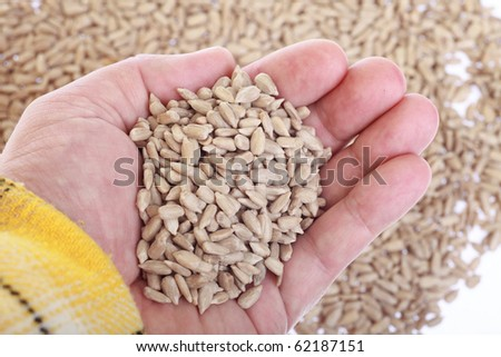 sunflower seeds in hands - nature background