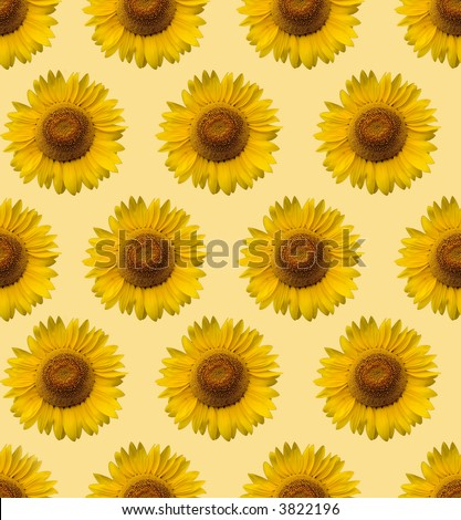 stock photo : sunflower wallpaper