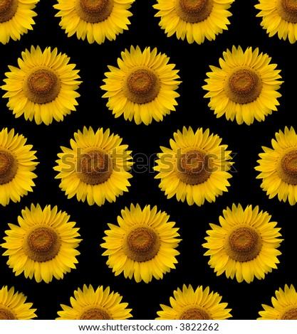 Pin Tumblr Sunflower Backgrounds