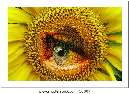 Sunflower with eye
