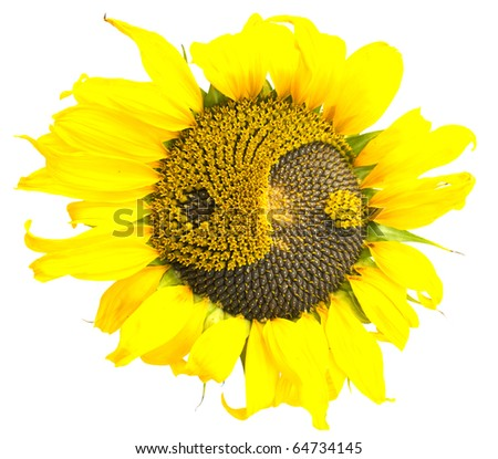 sunflower with petals and the symbol of yin-yang
