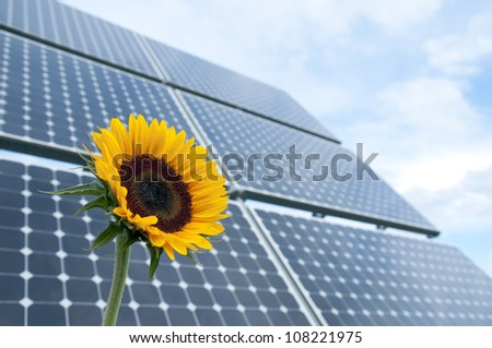 Sunflower with solar panels in the background against the blue sky