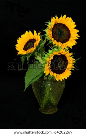 Sunflowers and Vase - Bright yellow sunflowers and a glass vase on a black background.