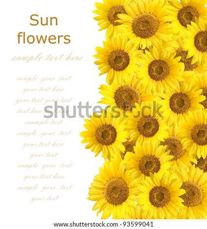 Sunflowers background with sample text