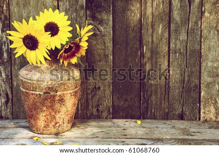 Sunflowers in a vase on a rustic, grunge background with copy space. This image is now available in my portfolio, with the flowers and vase isolated on white.