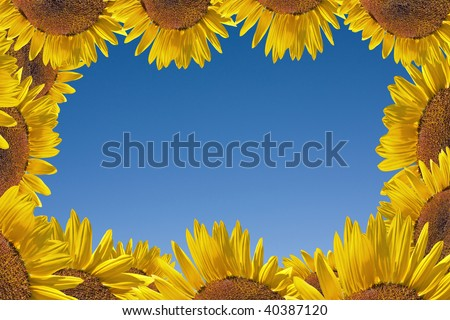 Sunflowers  on the blue sky background, frame with copy space