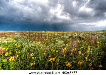 Sunflowers with approaching severe storm