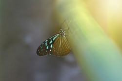 Sunlight and butterflies that are caught on objects in the houses of a reserve forest in Prachin Buri Province, Thailand