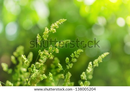 Sunlight and shadow on the spring grass