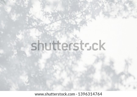 Sunlight and shadows on the wall from the branches of trees #1396314764